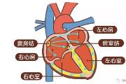 天津老人院:窦性心律是什么心律?