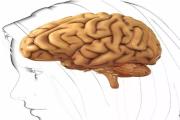 天津养老院:小脑萎缩损害多 积极防备有办法